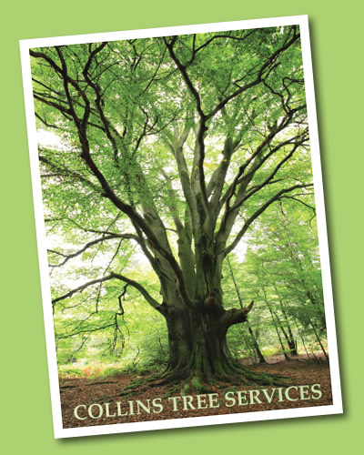 Collins Tree Services